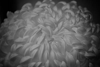 Photograph - Floral Caress by Mary Zeman
