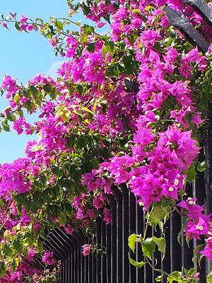 Photograph - Floral Cascade by Karen Zuk Rosenblatt