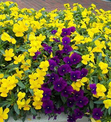 Photograph - Floral Cascade by Pamela Hyde Wilson