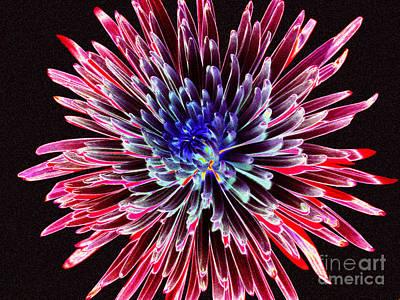 Photograph - Floral Color Burst by Sue Melvin