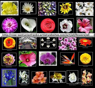 Photograph - Floral Composite Not For Sale by Rose Santuci-Sofranko