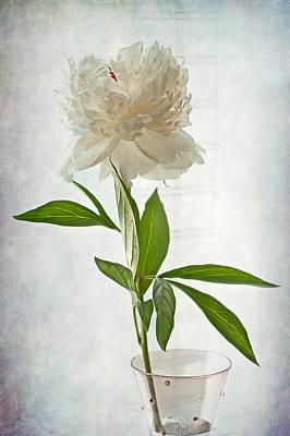 White Flower Photograph - Floral Conversation by Maggie Terlecki