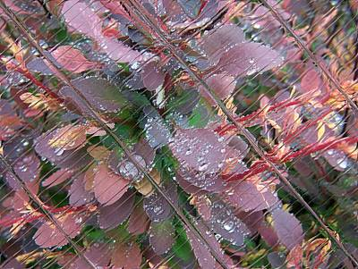Digital Art - Floral Digi Manip 26 by Gene Cyr