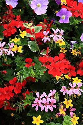 Photograph - Floral Display by Aidan Moran