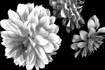 Photograph - Floral Drama by Marianne Dow