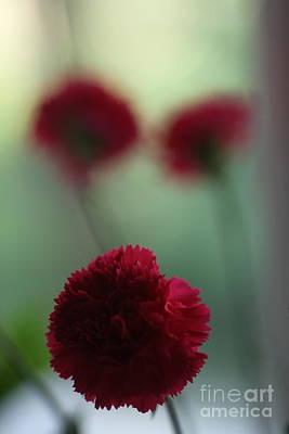 Photograph - Floral Fata Morgana. by  Andrzej Goszcz