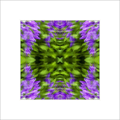 Floral Focus Art Print by Don Powers
