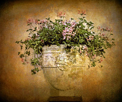 Planter Wall Art - Photograph - Floral Fresco by Jessica Jenney