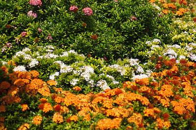 Photograph - Floral Garden by Bj Hodges