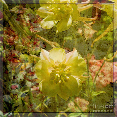 Photograph - Floral Haze by Liz  Alderdice