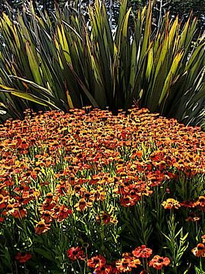 Digital Art - Floral Impact by Ben Freeman
