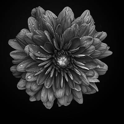 When Life Gives You Lemons - Floral Impression I by Glenn Springer