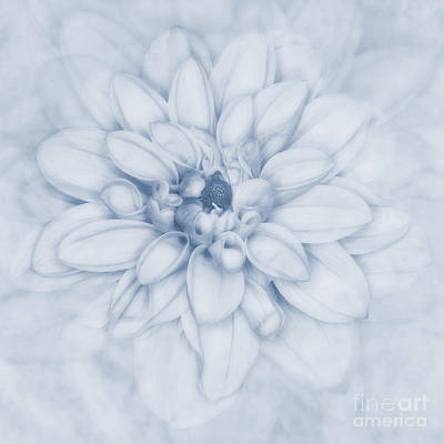 Floral Layers Cyanotype Art Print