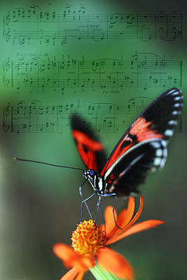 Floral Melody In Green Art Print by Charlie Photographer