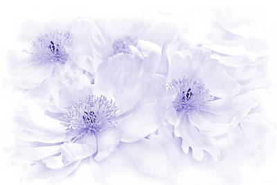 Photograph - Floral Peonies In Lavender by Jennie Marie Schell