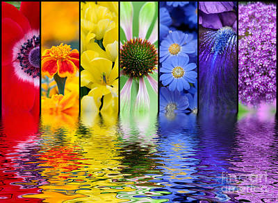 Water Filter Photograph - Floral Rainbow by Tim Gainey