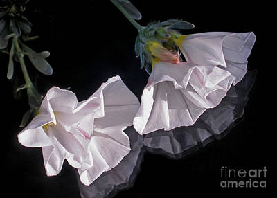 Floral Reflections Print by Kaye Menner