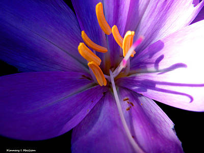 Photograph - Floral Shadow by Kimmary MacLean