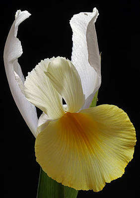 Iris Photograph - Floral Single Lady by Juergen Roth