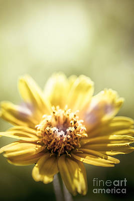 Macro Art Photograph - Floral Sunlight by Jorgo Photography - Wall Art Gallery