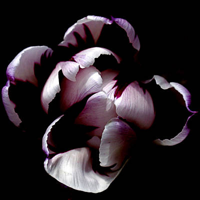 Photograph - Floral Symmetry by Rona Black