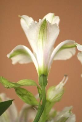 Photograph - Floral Tones by Deborah  Crew-Johnson