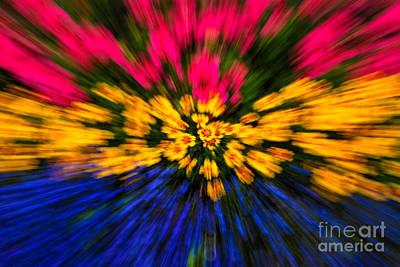 Photograph - Floral Triple Zoom by Grace Grogan