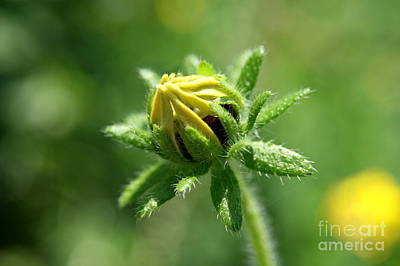 Flowers Photograph - Floral Wake  by Neal Eslinger