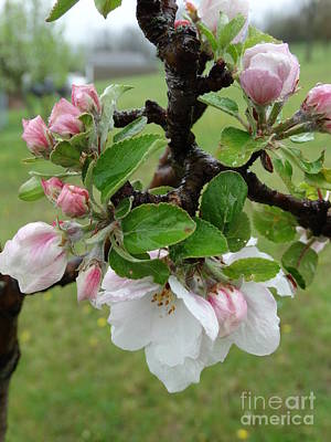 Photograph - Floral027a by Scott B Bennett
