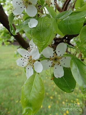 Photograph - Floral029a by Scott B Bennett