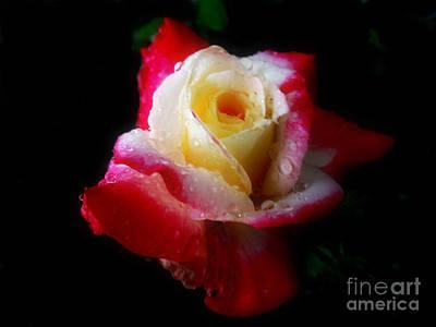 Photograph - Floral307a by Scott B Bennett