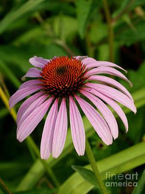 Photograph - Floral314a by Scott B Bennett