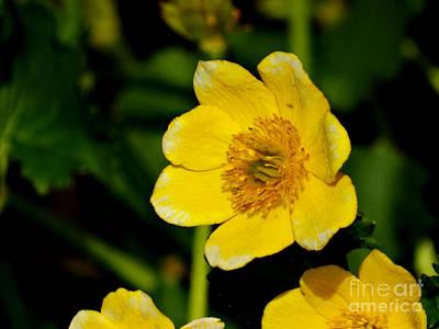 Photograph - Floral323a by Scott B Bennett