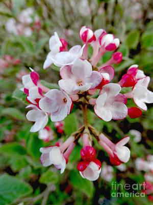Photograph - Floral378a by Scott B Bennett