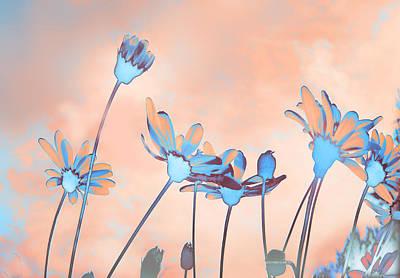 Photograph - Flores De Invierno by Alfonso Garcia