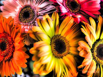 Photograph - Flores by Derek Selander