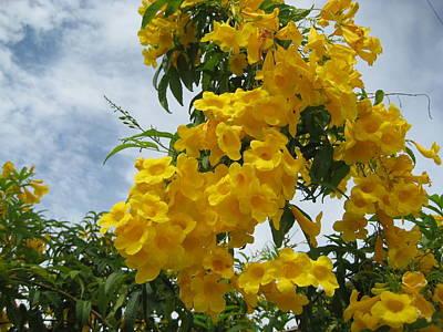 Photograph - Flores Mil  3 by Maria Akemi  Otuyama