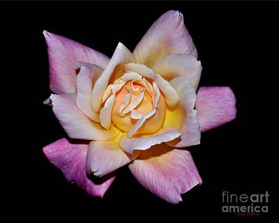 Photograph - Floribunda Rose by Susan Wiedmann