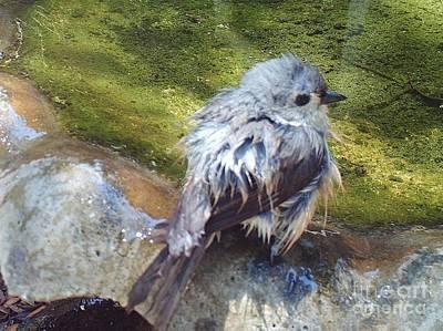 Florida - Bird - After The Bath Art Print by D Hackett