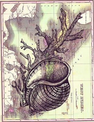 Florida Apple Snail Shell And Coral Original by Dawn Rosendahl