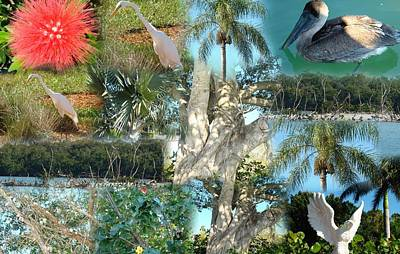 Florida Birds And Trees Art Print