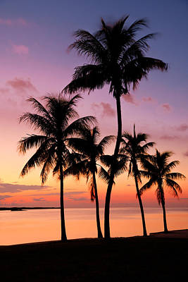 Palm Tree Photograph - Florida Breeze by Chad Dutson