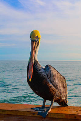 Photograph - Florida Brown Pelican 1 by Kathleen Scanlan