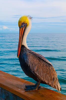Photograph - Florida Brown Pelican 2 by Kathleen Scanlan