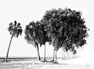 Photograph - Florida Coast by Grace Dillon