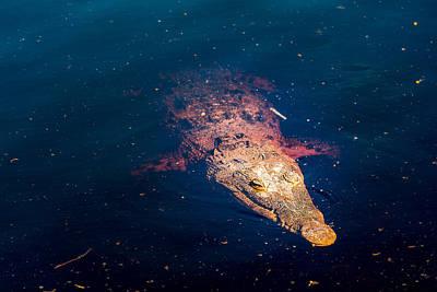 Lili Photograph - Florida Crocodile by Manuel Lopez