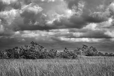 Photograph - Florida Everglades 0184bw by Rudy Umans