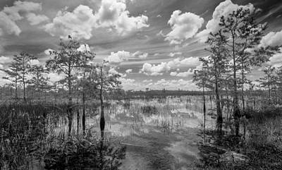 Photograph - Florida Everglades 5210bw by Rudy Umans