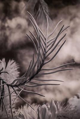 Florida Flora 1 Art Print