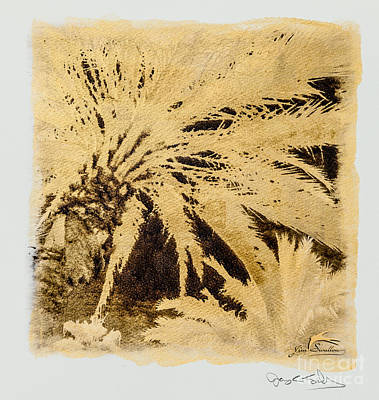 Palm Tree Photograph - Florida Golden Palms #2 Sq - Special Printing Process by Jim Swallow